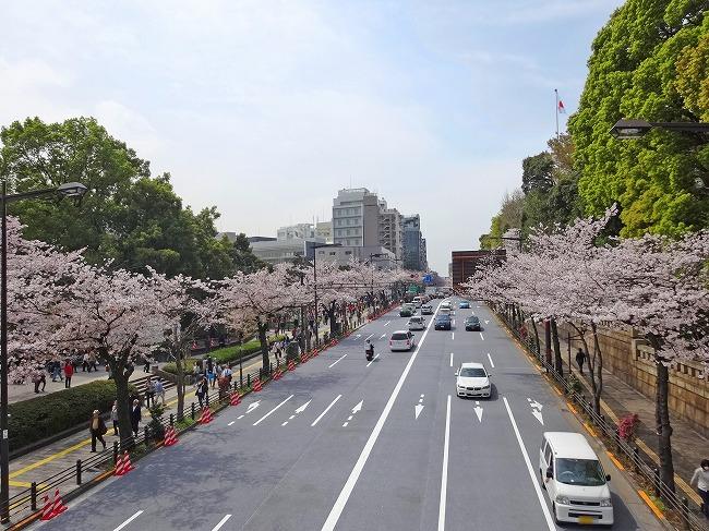 「千鳥ヶ淵緑道」の桜