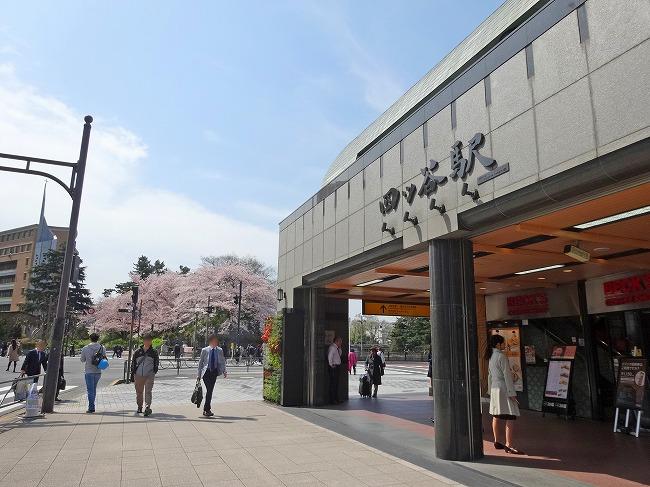 「上智大学」沿道の桜