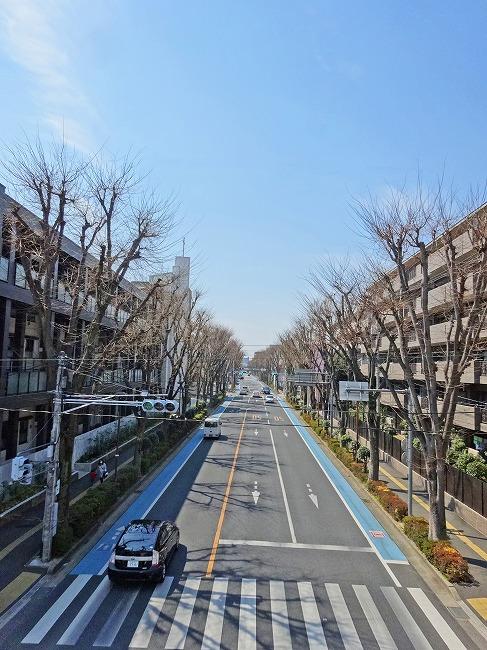 「日本一長いけやき並木」(現地より約270m)