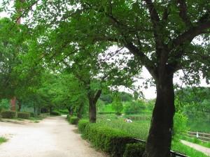 1ikegami_park-48